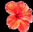 fleur copie.png