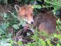 Hessen will die Jagd mit Schlagfallen verbieten