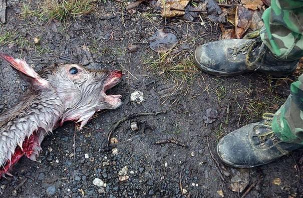 Totes Reh und Jäger