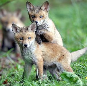 Niedersachsen: Tierschutz bei der Jagd hinderlich