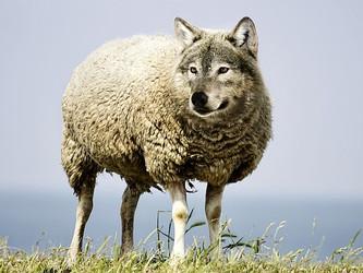 Die Angst vor dem großen bösen Wolf – oder: Die Macht der Hysterie
