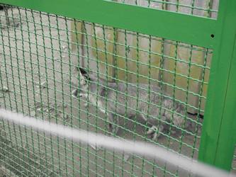 Guantánamo für Füchse im Wildpark Frankenberg (Eder), Hessen