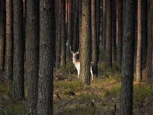 Über die Systemrelevanz der Jagd