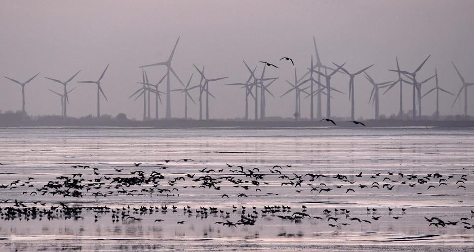 Windräder an der Nordseeküste, Aurich