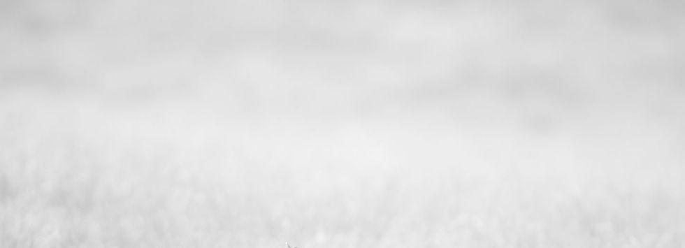 Hintergrund grau.JPG
