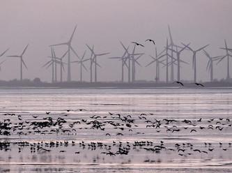 Windenergie: Die Naturschutzregeln werden aufgeweicht