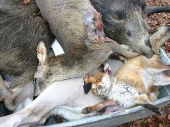 Für die Mülltonne jagen: Die Doppelmoral des Jagdpräsidenten