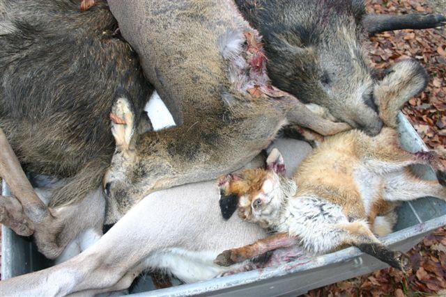 Für die Mülltonne jagen - totes Wild auf dem Hänger