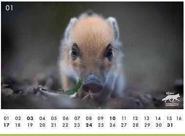 01 Schweinchen.JPG