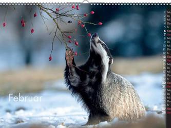 Wildtierkalender 2021 - ausverkauft