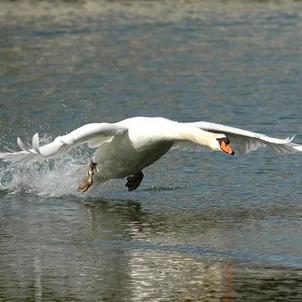 Vogeljagd: Mit Wertevorstellungen des Tierschutzes nicht vereinbar