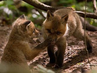 Jäger sind Tierquäler