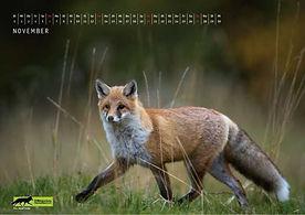 11 Wildtierkalender 2022 Füchse.JPG.JPG