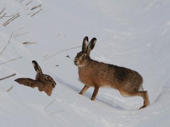Jägerlatein: Füchse und Hasen