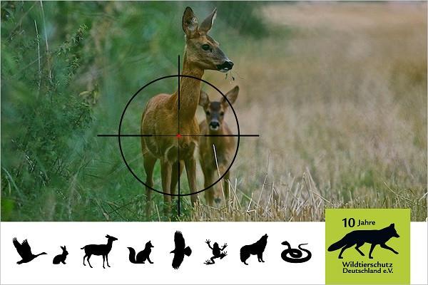 Aushebelung des Tierschutzgesetzes für Wildtiere bei der Jagd