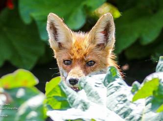 Der Abenteurer und Fotograf Timo Litters bei Wildtierschutz Deutschland