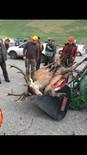 Klöckners Jagdgesetznovelle ist eine Katastrophe für die Tiere