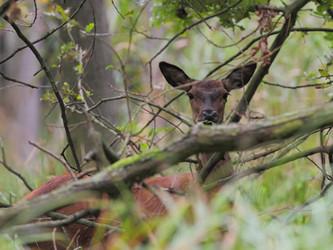 Über Jäger, Hege und Wildtiere