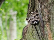 Bayern: Von der Hochschule bis ins Ministerium - keine Achtung vor der Kreatur