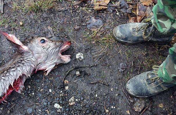 erschossenes Reh am Boden im Regen