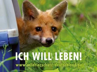 Petition: Keine Jagd auf Fuchseltern