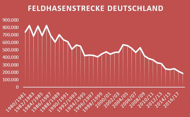 Jagdstrecke der Feldhasen in Deutschland
