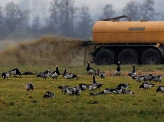 Trotz hoher finanzieller Kompensation der Bauern - Naturschutz nur auf dem Papier