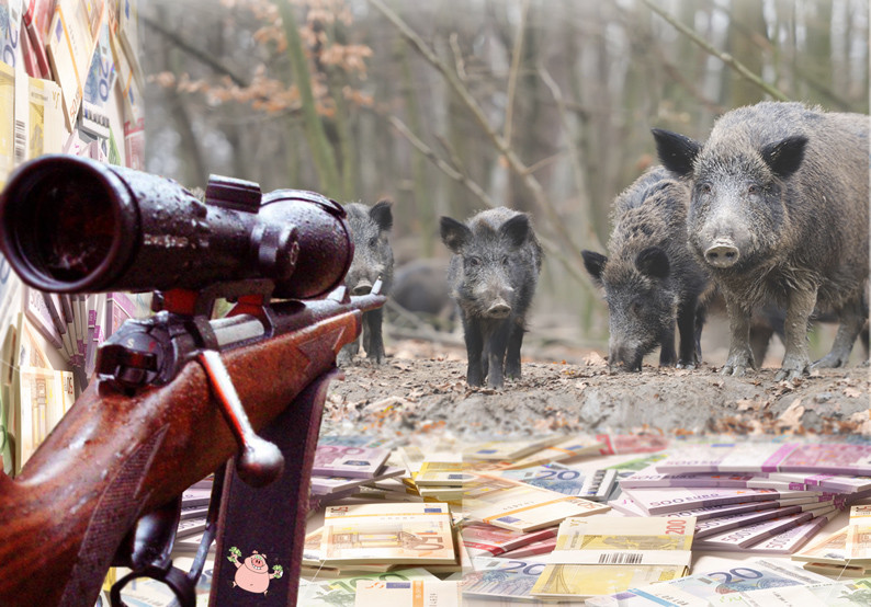 Wildschweine im Visier