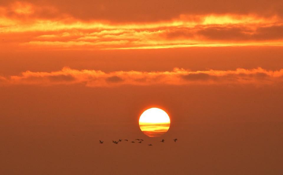 Sonnenuntergang mit Gänseflug