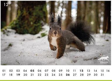 12_Eichhörnchen.JPG