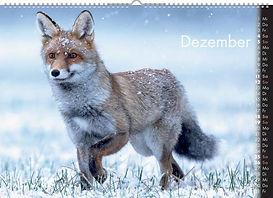 12_Dezember (FILEminimizer).jpg