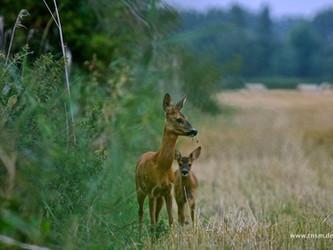 Klöckner auf dem Holzweg – mehr Jagd ist nicht die Lösung für den Waldumbau