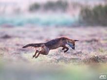 Warum Wildtierschutz Deutschland sich für Füchse einsetzt