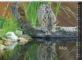 05_Mai (FILEminimizer).jpg