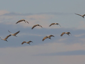Erfahren sie mehr vom Vogelzug der Kraniche, den Geheimnissen der Nutria ....