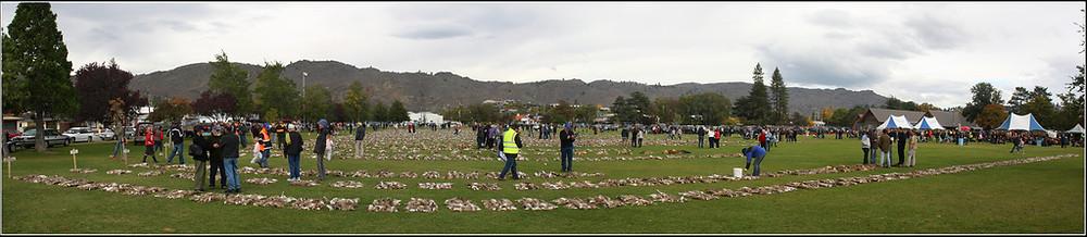 Hasenstrecke getötete Feldhasen