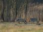 Wolf Niedersachsen: Tierschutz fordert konstruktiven Dialog
