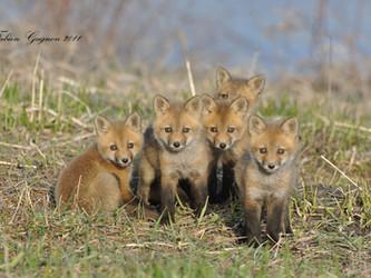 Tierschutzbündnis: Demo gegen Jäger-Veranstaltung