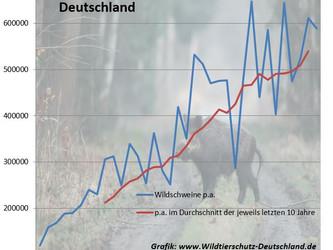 Wie viele Wildschweine werden in Deutschland jedes Jahr getötet?