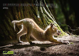 04 Wildtierkalender 2022 Füchse.JPG.JPG