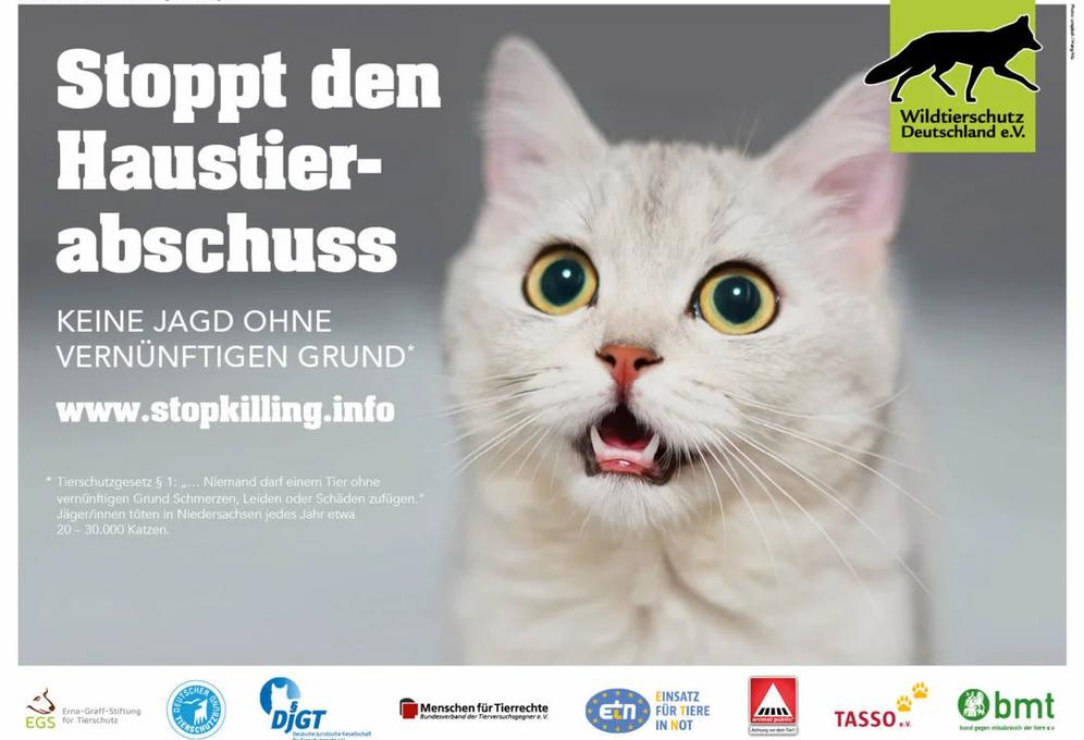 Katzen gehören nicht ins Jagdgesetz