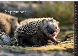 09_September (FILEminimizer).jpg