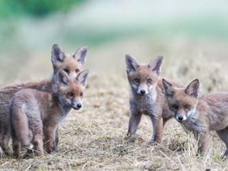 Betreff: Jagd - Märchenstunde des Hessischen Umweltministeriums
