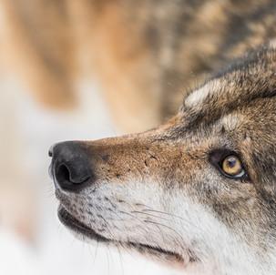 Artenschutz und Jagdrecht müssen getrennt werden