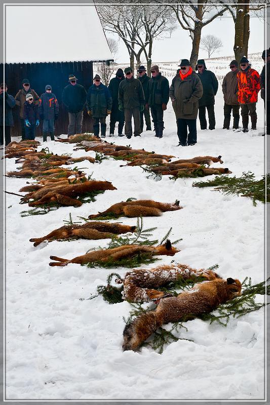 Fuchsstrecke einer Fuchswoche