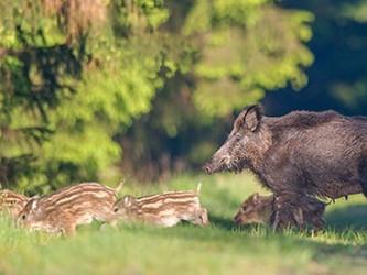 Nachtzieltechnik: Deutscher Jagdverband will die totale Jagd