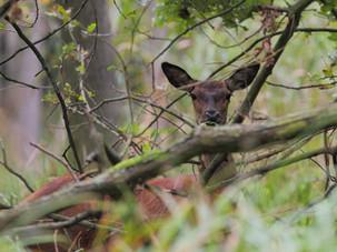 Staatsforste - Jagd außerhalb der Gesetze
