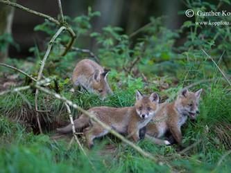 Welche Auswirkungen hat die Jagd auf das ökologische Gleichgewicht?