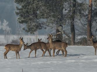 Hessens CDU und Grüne reden dem Jagdverband das Wort