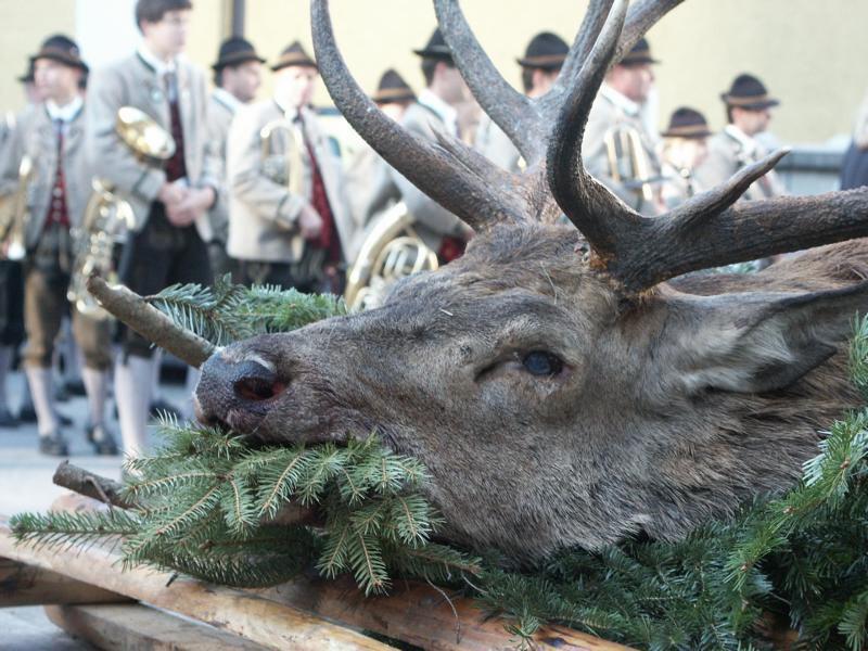 Hubertusmesse: Toter Hirsch als Opfergabe